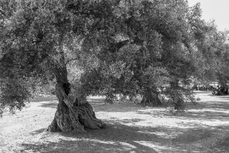 olivier-2001