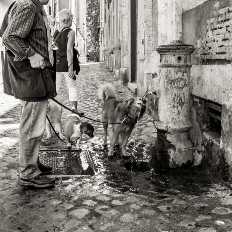 rome 2014-27
